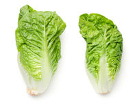 Romaine Lettuce Isolated On White Background