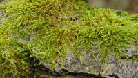 living green moss
