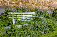 Wooden bench overgrown with lush vegatation left