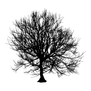 Black dry tree winter or autumn silhouette on white background. Vector eps10 illustration