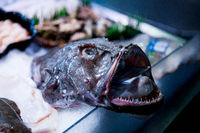 Fresh fish display on English Market for sale. Cork/Ireland