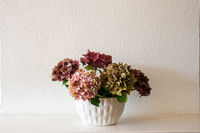 Fresh natural Flowers in white vase with white wall, white interior decor modern clean design