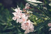 Flowers in the summer garden