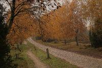 Weg in der Lueneburger Heide