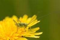 Outdoor macro image of beetle