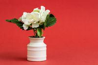 White Artificial Flower in White Porcelain Flowerpot on Red