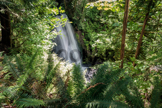 waterfall hidden by overgrown banks of fern and maple