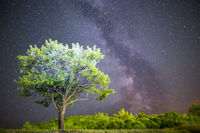 Green tree Milky way night sky