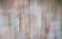 nature motion blur abstract