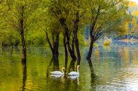 Spring Flood in Lago de Fusine