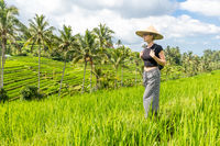 Relaxed fashionable caucasian female tourist wearing small backpack and traditional asian paddy hat walking among beautiful green rice fields and terraces on Bali island