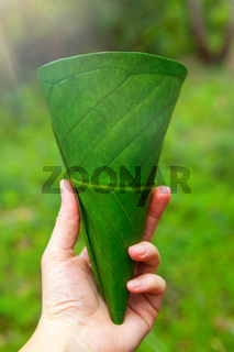 Ecologic cup made from leaves