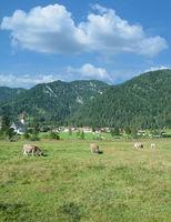 Sankt Ulrich am Pillersee,Tirol,Oesterreich