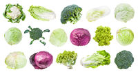 many various headed cabbages isolated on white