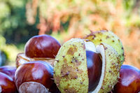 Chestnut with cracked shell