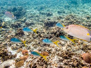 Underwater photos of group sea fish