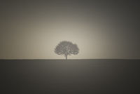 Vintage image with a single tree