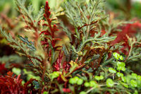 Fine plant , green and red colored