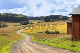 Country Road Through Fields in Late Summer