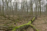 Totholz... Hambacher Forst *Nordrhein-Westfalen*