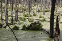 Feuchtgebiet im Borkener Wald,Puszcza Borecka