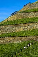 Steile Weinbergterassen auf Trockenmauern aus Naturstein, Pinhao, Douro Tal, Portugal
