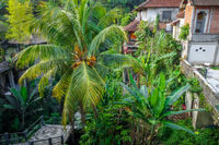 Houses in jungle, Ubud, Bali, Indonesia