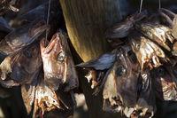 Zum Trocknen aufgehängte Fischköpfe auf den Lofoten, Norwegen