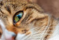 Close up of the Cat eye