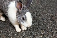 Little rabbit on the gravel ground.