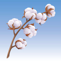 Beautiful realistic cotton branch isolated on blue background