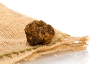 Original italian white truffle (tuber magnatum) on white background.