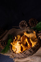 Real chanterelle, enjoyment from the forest