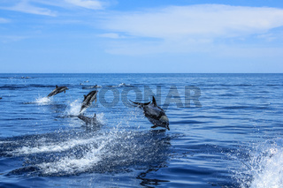 Group of Dolphins jumping