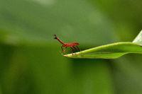 Bug, Aarey milk colony Mumbai , India