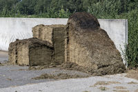 Silage in a concrete pit