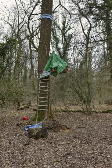Baumbesetzung... Hambacher Forst *Nordrhein-Westfalen*