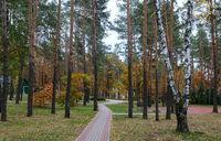 Autumn landscape: autumn trees in the Park.