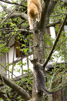 at and Kitten climbing on a Tree