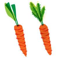 organic carrots, food illustration in vintage style