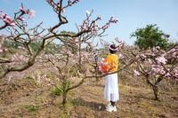 Chinese girl with a flower crown enjoying peach blossom trees