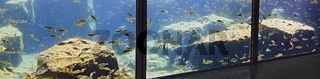 Gang mit Fenstern zu einem Aquarium mit kleinen Barschen