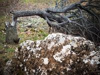 Baum geknickt nach Sturm