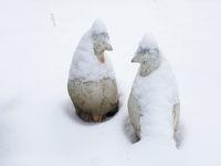 Taubenfiguren im Schnee