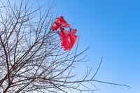 Fallen flying lantern