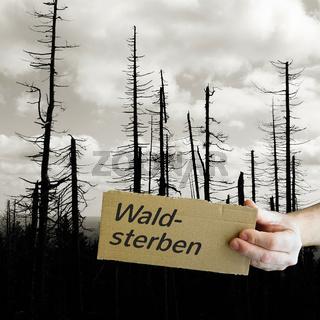 Schild aus Pappe mit der Aufschrift Waldsterben