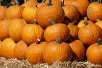 1 BA Pumpkins 1616.jpg