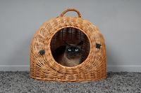 cat resting in wicker basket