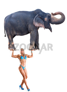 Abstract concept photo of mighty woman holding elephant on her hands isolated over white background