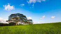 Tree on a Grassy Hillside